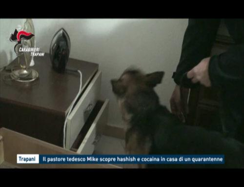 Il pastore tedesco Mike scopre hashish e cocaina in casa di un quarantenne