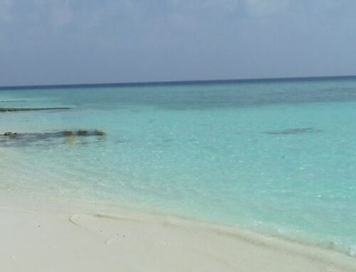 """Best practice per la tutela del mare, Pecoraro Scanio """"Polmone pianeta"""""""