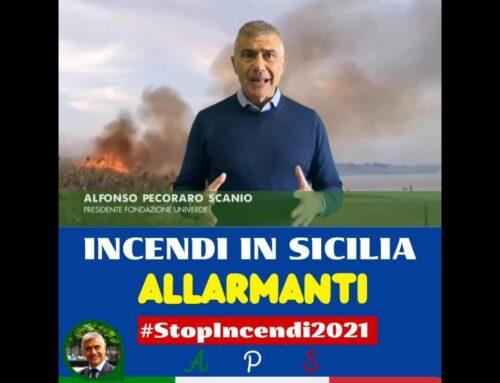 """Incendi, Pecoraro Scanio """"La Sicilia va a fuoco già in primavera"""""""
