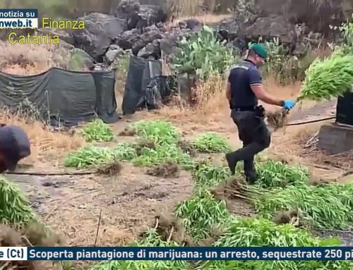 Bronte (Ct). Scoperta piantagione di marijuana: un arresto, sequestrate 250 piante