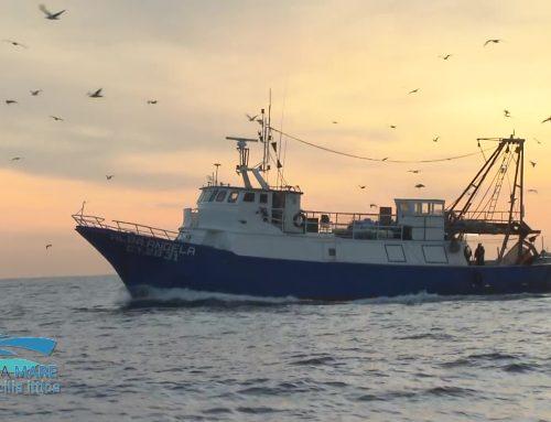 Linea Mare – Pesca sostenibile